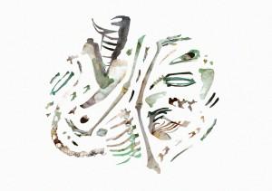Detailed collage of illustrated bird bones …