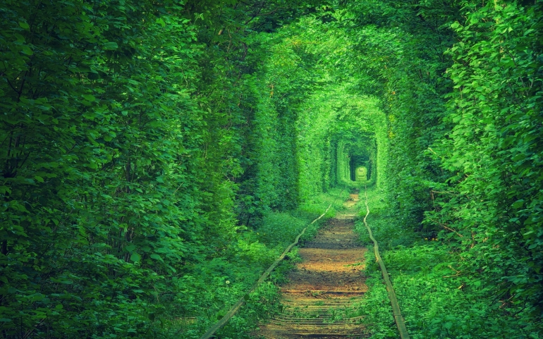 Lover's Tunnel in Ukraine – Photography Wallpapers