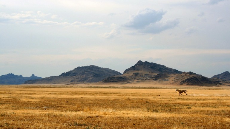 Running Wild Horse – Photography Wallpapers
