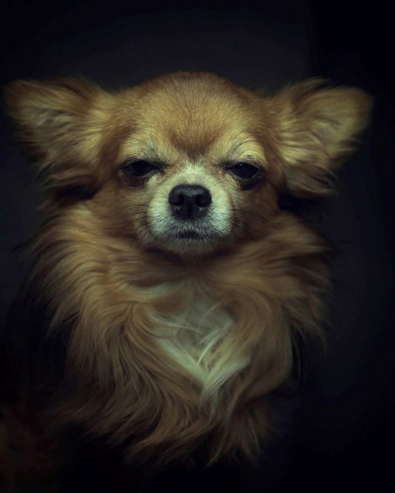 Emotional Portraits of Animals by Vincent Lagrange