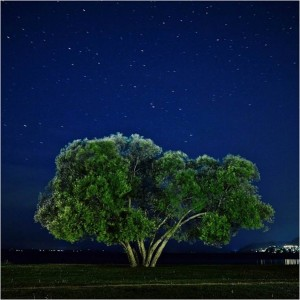 Patrik Svedberg Captured The Broccoli Tree For 2 Years