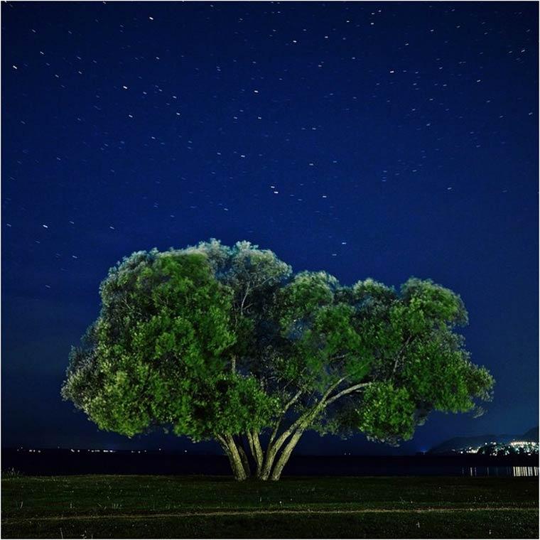 Patrik Svedberg Captured The Broccoli Tree For 2 Years