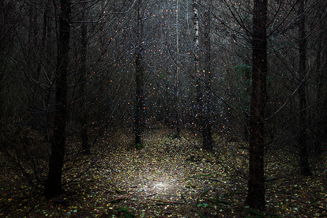 Stars by Ellie Davies | Photographist