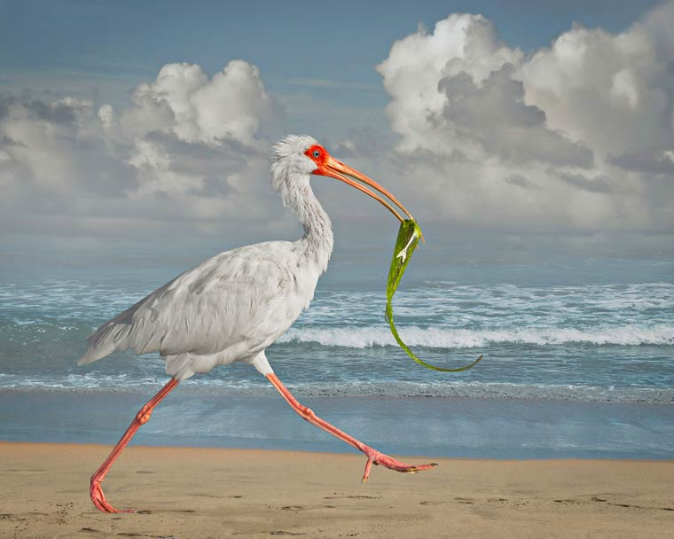 Stunning Birds Photography by Cheryl Medow
