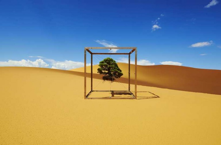 Azuma Makoto Captures His Bonsai Tree's Journey