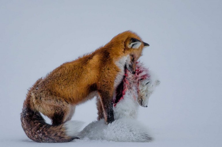 Wildlife Photographer of The Year 2015 Winners