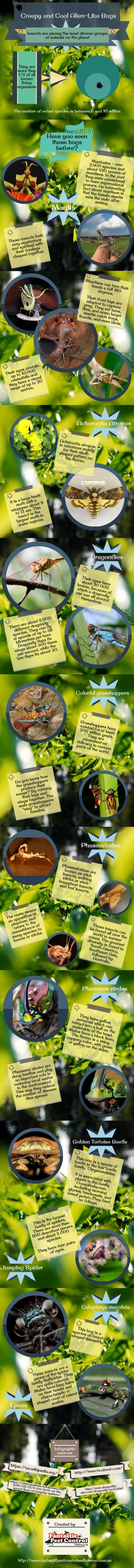 Have you seen these cool alien-like bugs before? There are a lot of strange creatures in the wor ...