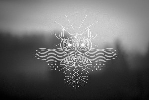 moth and owl tattoo