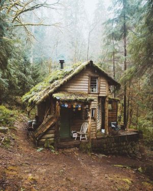 Perfect Cabin hidden away in woods of Washington