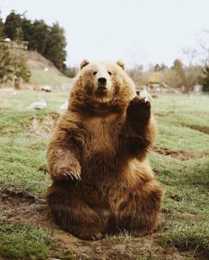 Oh Hi Bear ?