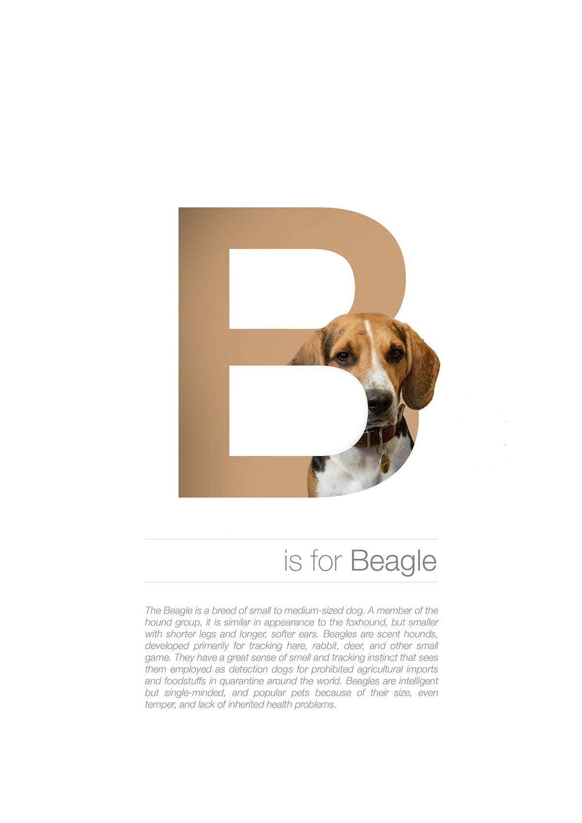 Letter Dog Breeds
