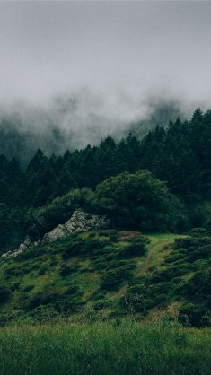 Beautiful Back to Nature iPhone 7 Wallpaper