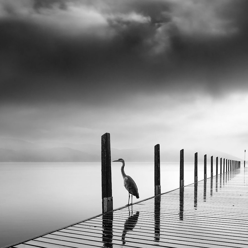 Photographer Captures Depth of Nature in Black and White