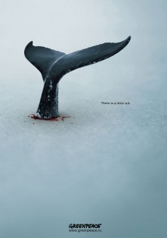GREENPEACE Whales Poster