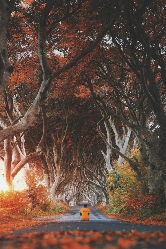 Autumn in Dark Hedges, Northern Ireland