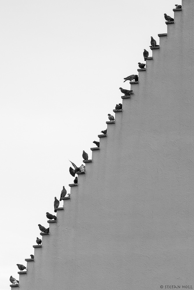 Pigeons Stairs
