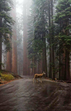 Beauty of a forest in California