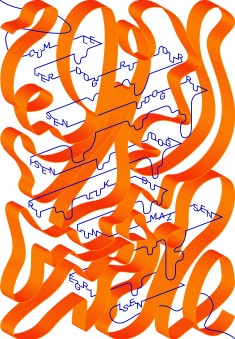Yunus Emre Calligraphy & Typography 2017