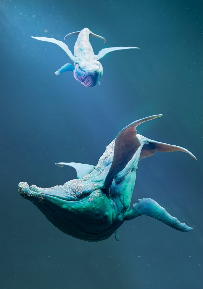 Whale Whale Whale, Mickael Lelièvre