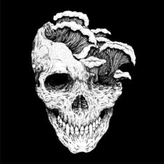 Skull 3 by alyudapn