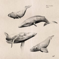 Day12 – Small study of whales.